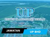 united plantations berhad up bhd